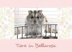 Fotobuch Tiere Bellarosa