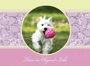 Fotobuch Tiere Elegant Lila