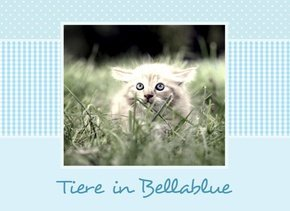 Fotobuch Tiere Bellablue